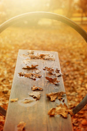 empty seesaw with autumn leaves on it