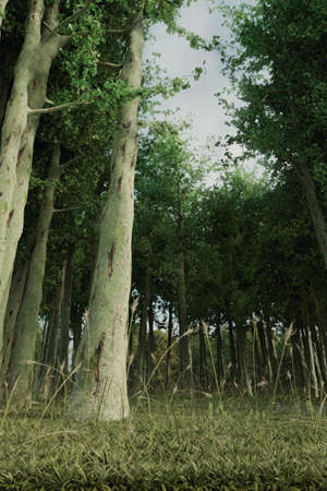 3d rendering of forest aisle and high trees from low angle view
