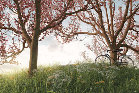 3d rendering of leaned black bicycle at japanese cherry tree in the meadow gras landscape in the evening sunlight 版權商用圖片