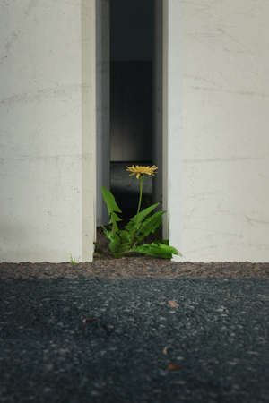 3d rendering of dandelion plant growing up in concrete environment Stockfoto - 130047840