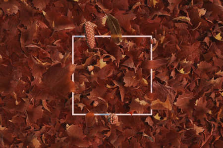3d rendering of white square with autumn leaves. Flat lay of minimal nature style concept Reklamní fotografie