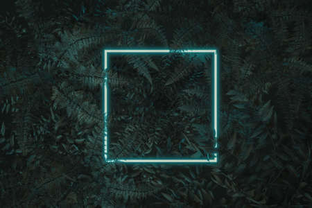 3d rendering of white square neon light with fern and bowenia plants. Flat lay of minimal nature style concept