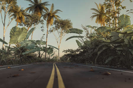 3d rendering of a road in the jungle forest with yellow line in the centre Archivio Fotografico