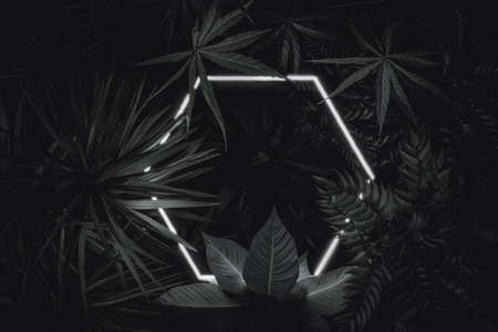 3d rendering of white hexagon neon light with tropical plants. Flat lay of minimal nature style concept in elegant black color