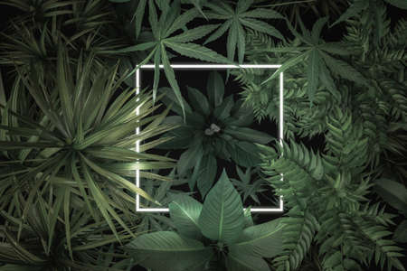 3d rendering of white square neon light with tropical plants. Flat lay of minimal nature style concept Archivio Fotografico