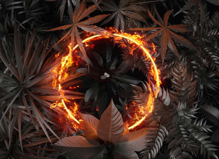 3d rendering of circle shape in fire over tropical plants. Flat lay of minimal nature style concept Archivio Fotografico