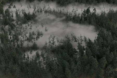3d rendering of misty forest in aerial view
