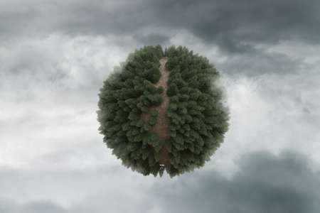3d rendering of conifer forest with path in spherical shape