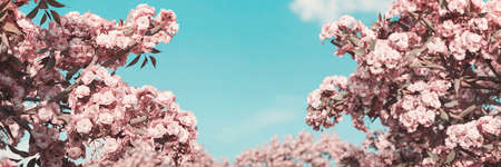3d rendering of japanese cherry blossom in front of blue sky. Selective focus