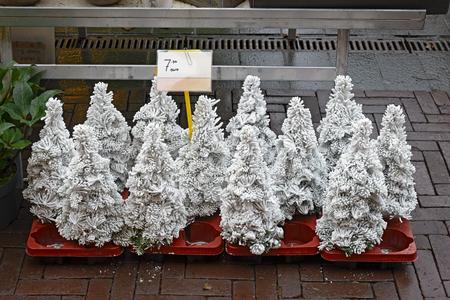 オランダの市場の販売のための人工雪で覆われた小さいクリスマス ツリー 写真素材