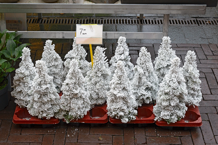 Small christmas trees covered with artificial snow for sale on a market in Holland Imagens