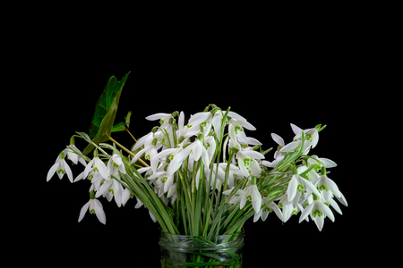 Bunch of snowdrops is a jar on black background Imagens