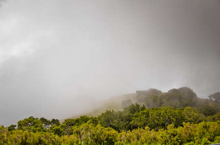 Wafts of mist are laying in the highlands of Madeira and generate a spooky atmosphere