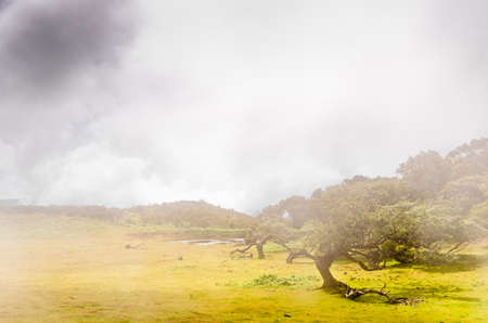 Wafts of mist are laying in the highlands of Madeira and generate a magic atmosphere