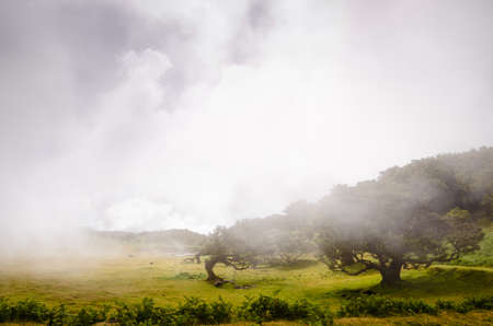 Wafts of mist are laying in the highlands of Madeira and generate a mysterious atmosphere 写真素材