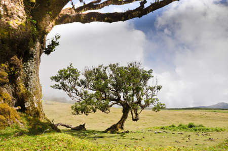A small tree under a tree in the highlan of Madeira, some clouds are rising up 写真素材