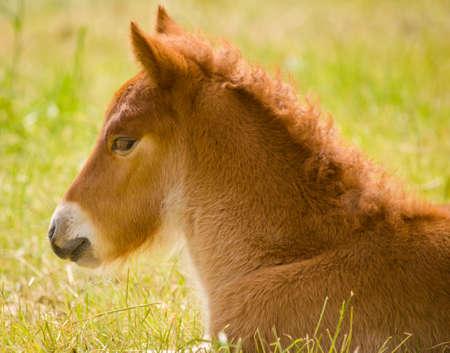 Cute newborn foal on a meadow in spring