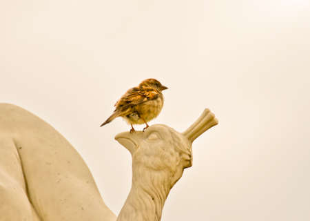 A single sparrow sits on a figure, a peacock of stone in front of white sky