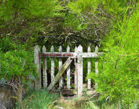 An old wooden garden gate, grown over with plants