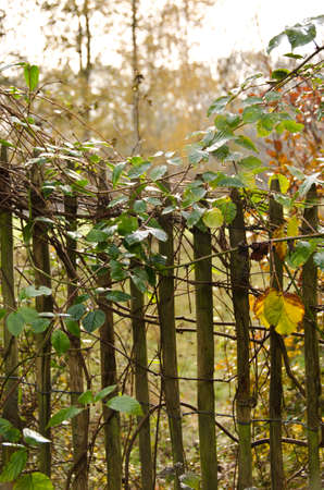 An old fence of a wild garden in a romantic backlight 版權商用圖片