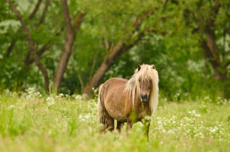Beautiful pregnant mares with colorful fur in the meadow, waiting for the birth of their foals