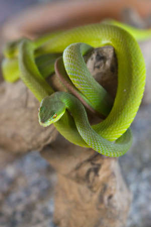 A green snake on tree
