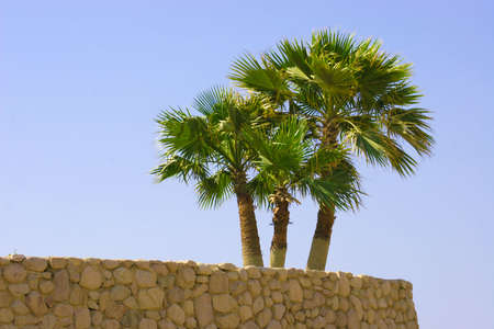 Palm tree on stone wall