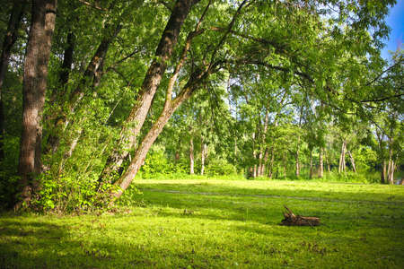 Glade in the summer forest at sunny day Stock Photo