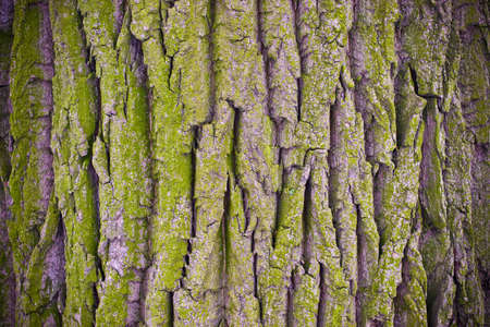 Old trees bark (can be used as background)