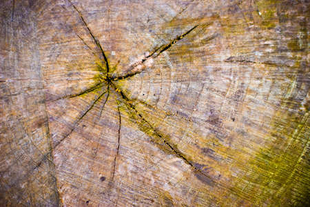 Cross Section of a old tree stump