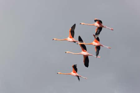 formations: Flight of famingos