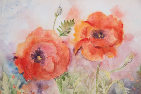 aquarel: Two poppies