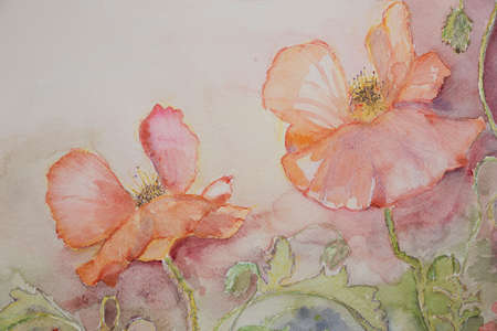 poppies: Pink and orange poppies