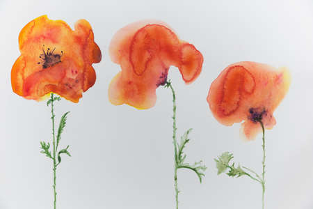 trio: Three poppies on a light background
