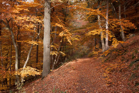 hiking path: Hiking path near Diemelsee in autumn