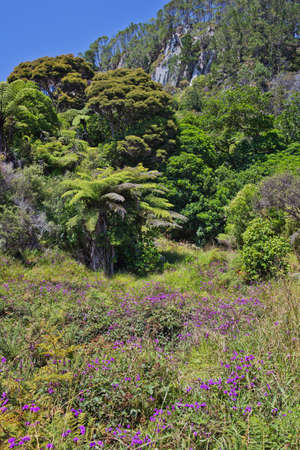 subtropical: Sub-tropical vegetation near Cathedral Cove Stock Photo