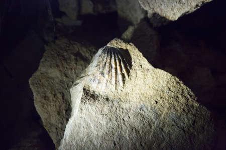glowworm: Fossiles in the Ruakuri cave Stock Photo