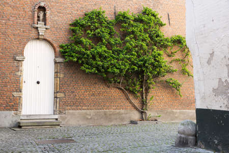 House with tree in the beguinage of Mechelen