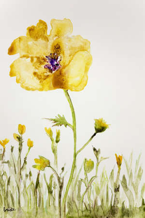 handiwork: Yellow anemone on a white background