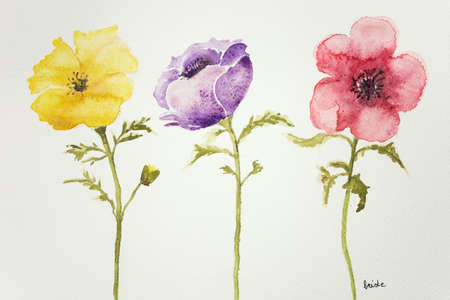 anemones: Three anemones on a white background Stock Photo