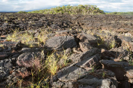 lava field: Lava field with ropy pahoehoe on Isabela