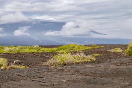 obrero: ropy campo de lava pahoehoe con el volc�n escudo en Fernandina. El enfoque suave, debido a que el aire caliente ascendente. Foto de archivo