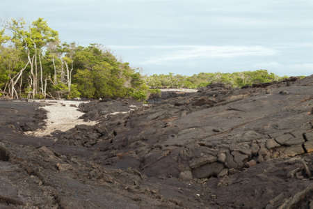 labourers: Lava field with some sand  on Fernandina