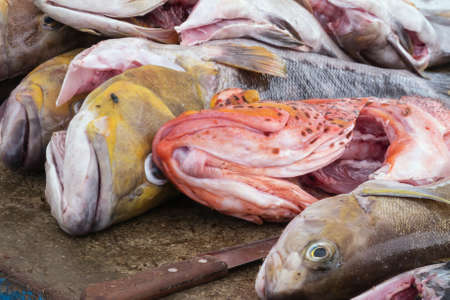 Fish for sale in an open shop in Puerto Ayora. Selective focus on the head of the fishes. The mucus on the fishes softens the focus. Stock Photo