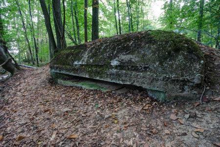 monte sinai: Correo de Outlook escondido en el bosque en el Monte Sina�