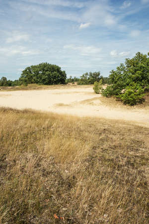 moorland: Moorland and sand dunes