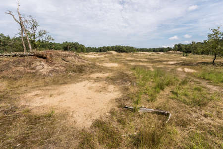 moorland: Moorland and forest on the Loonse and Drunense sand dunes Stock Photo