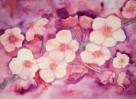 aquarelle painting art: Cherry blossoms in warm pinkish colors. The dabbing technique gives a soft focus effect due to the altered surface roughness of the paper. Stock Photo