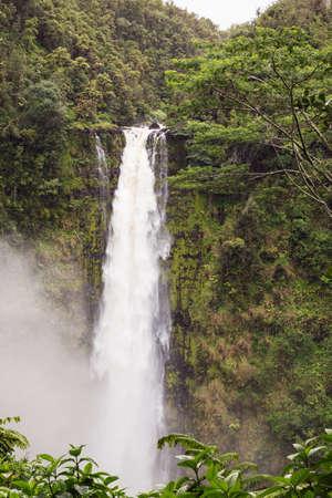 fern  large fern: View of Akaka Falls and its tropical surroundings Stock Photo