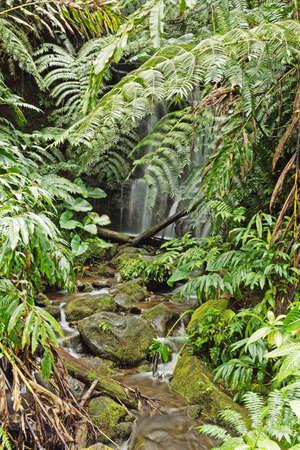 fern  large fern: Idyllic small waterfall near Akaka Falls. The draught of the waterfall causes some motion blur in the foliage. Stock Photo
